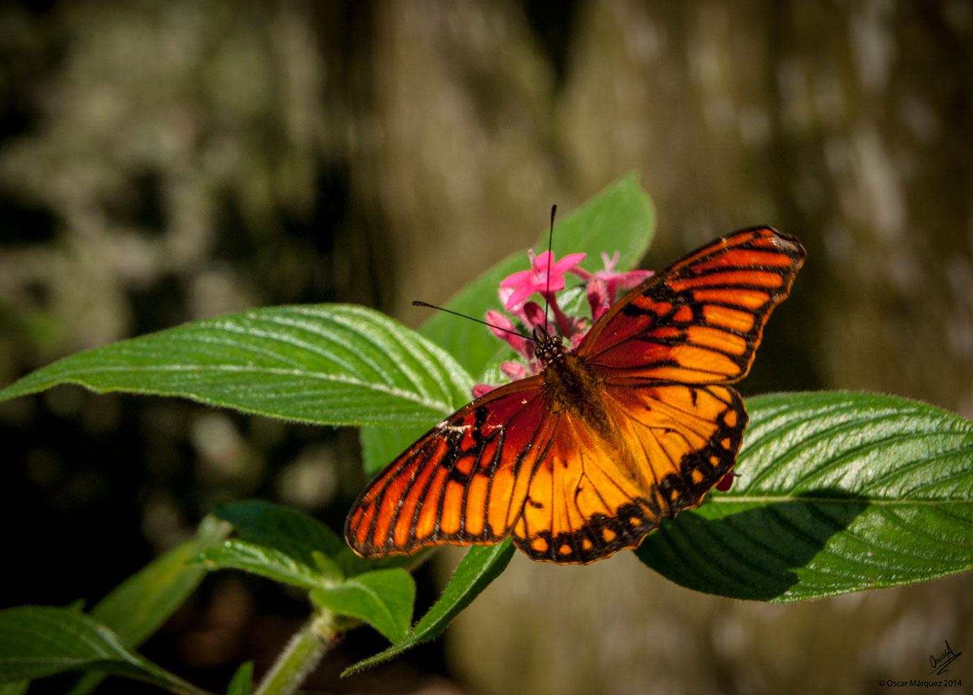 Mariposa Color Naranja en el Curso de Fotografía