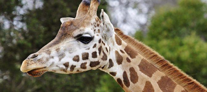Puede comprar cualquier cosa en el Internet, incluso un zoológico