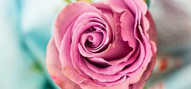 Las flores catalogadas como flor nacional