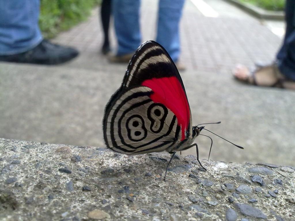 Mariposa en el camino