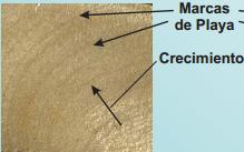 Figura 11.