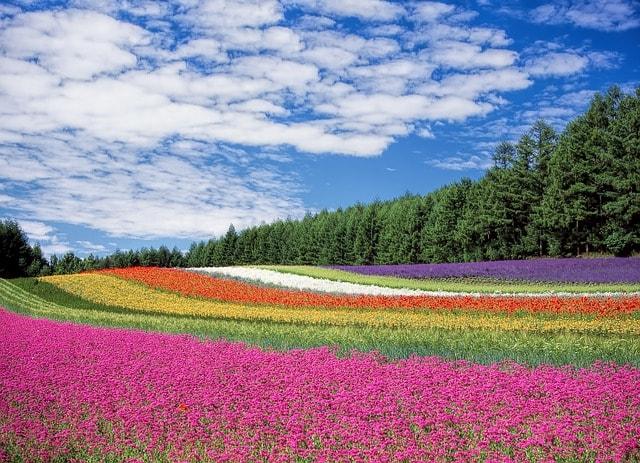 Las flores más hermosas que podemos regalar