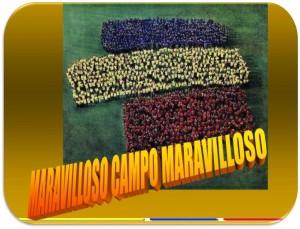 MARAVILLOSO CAMPO MARAVILLOSO