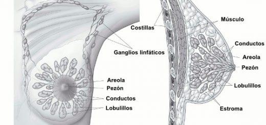 cancer-tejidos-mamarios